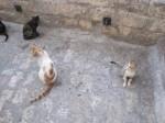 Cats in Jerusalem